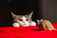 Γάτα σε μια ενέδρα σε ένα κυνήγι ποντικιών Στοκ εικόνα με δικαίωμα ελεύθερης χρήσης