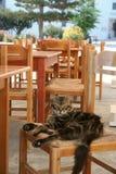 Γάτα σε μια καρέκλα σε ένα ελληνικό εστιατόριο Στοκ Εικόνες
