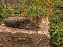 Γάτα σε μια κύρια πέτρα Στοκ φωτογραφία με δικαίωμα ελεύθερης χρήσης