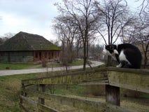 Γάτα σε μια ξύλινη φραγή Στοκ φωτογραφίες με δικαίωμα ελεύθερης χρήσης