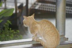 Γάτα σε μια προεξοχή στοκ φωτογραφία με δικαίωμα ελεύθερης χρήσης