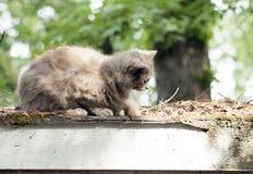 Γάτα σε μια στέγη Στοκ Εικόνες