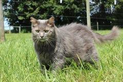 Γάτα σιταποθηκών στοκ φωτογραφία με δικαίωμα ελεύθερης χρήσης