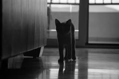 Γάτα σκιών Στοκ Φωτογραφία