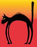 γάτα σκληρών τριχών στοκ φωτογραφίες