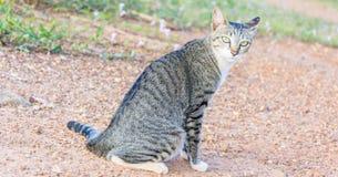 Γάτα σπιτιών στην άμμο στοκ φωτογραφία με δικαίωμα ελεύθερης χρήσης
