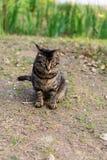 Γάτα σπιτιών στο έδαφος υπαίθρια Στοκ εικόνες με δικαίωμα ελεύθερης χρήσης