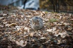 Γάτα στα πεσμένα φύλλα Στοκ Φωτογραφία