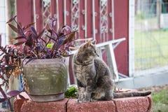 Γάτα στα τούβλα Στοκ Φωτογραφία