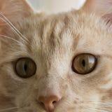 Γάτα στενό επάνω p4 Στοκ εικόνα με δικαίωμα ελεύθερης χρήσης