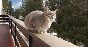Γάτα στην επιφυλακή στο μπαλκόνι Στοκ Εικόνες