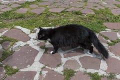 Γάτα στην καλύβα Eho Η γάτα είναι φυλακτό της καλύβας στοκ φωτογραφία με δικαίωμα ελεύθερης χρήσης