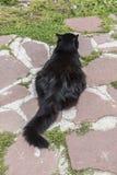 Γάτα στην καλύβα Eho Η γάτα είναι φυλακτό της καλύβας στοκ εικόνα
