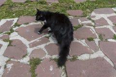 Γάτα στην καλύβα Eho Η γάτα είναι φυλακτό της καλύβας στοκ εικόνες