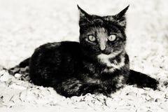 Γάτα στην παραλία φωτογραφία Στοκ Φωτογραφίες