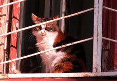 Γάτα στην παλαιά πόλη της Οδησσός, Ουκρανία Στοκ φωτογραφία με δικαίωμα ελεύθερης χρήσης