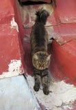 Γάτα στην παλαιά στέγη μετάλλων στοκ φωτογραφίες με δικαίωμα ελεύθερης χρήσης