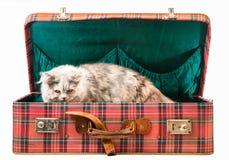 Γάτα στη βαλίτσα Στοκ εικόνα με δικαίωμα ελεύθερης χρήσης