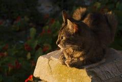 Γάτα στη Βραζιλία Στοκ Εικόνα