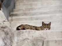 Γάτα στη σκάλα Στοκ Φωτογραφίες