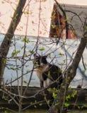 Γάτα στη στέγη στοκ φωτογραφία με δικαίωμα ελεύθερης χρήσης