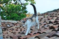 Γάτα στη στέγη Στοκ εικόνες με δικαίωμα ελεύθερης χρήσης