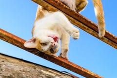 Γάτα στη στέγη Στοκ Εικόνες