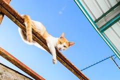 Γάτα στη στέγη Στοκ Εικόνα