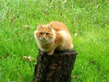 Γάτα στη φύση Στοκ φωτογραφία με δικαίωμα ελεύθερης χρήσης