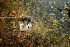 Γάτα στη φύση Στοκ εικόνες με δικαίωμα ελεύθερης χρήσης