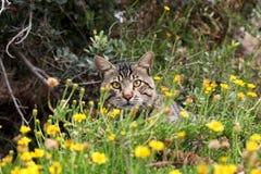 Γάτα στη φύση Στοκ Φωτογραφίες