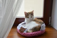Γάτα στη χειροποίητη φωλιά Στοκ Εικόνα