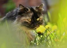 Γάτα στη χλόη στοκ φωτογραφίες με δικαίωμα ελεύθερης χρήσης