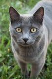 Γάτα στη χλόη Στοκ Εικόνα