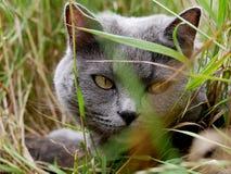 Γάτα στη χλόη στοκ εικόνες