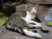 Γάτα στις τρώγλες Mumbai, Ινδία Στοκ Εικόνες