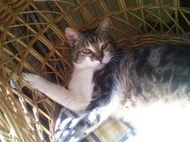 Γάτα στον ήλιο σε μια ψάθινη καρέκλα Στοκ εικόνα με δικαίωμα ελεύθερης χρήσης
