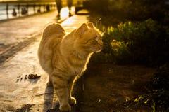 Γάτα στον ήλιο Στοκ φωτογραφίες με δικαίωμα ελεύθερης χρήσης