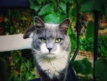 Γάτα στον κήπο Στοκ Εικόνες