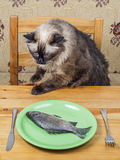 Γάτα στον πίνακα γευμάτων στοκ εικόνα