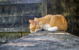 Γάτα στον τοίχο Στοκ Εικόνες