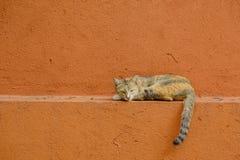 Γάτα στον τοίχο Στοκ Φωτογραφίες