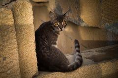 Γάτα στους βράχους Στοκ φωτογραφίες με δικαίωμα ελεύθερης χρήσης