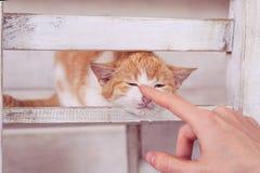 Γάτα στο άσπρο εσωτερικό σε chear Στοκ εικόνες με δικαίωμα ελεύθερης χρήσης