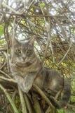 Γάτα στο δέντρο Στοκ Εικόνες