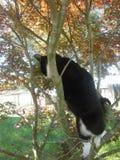 Γάτα στο δέντρο Στοκ φωτογραφία με δικαίωμα ελεύθερης χρήσης