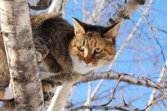 Γάτα στο δέντρο Στοκ εικόνα με δικαίωμα ελεύθερης χρήσης