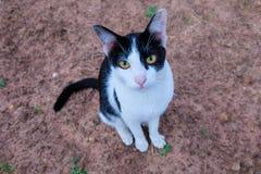 Γάτα στο έδαφος στοκ εικόνες
