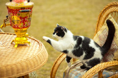 Γάτα στο λίκνισμα της καρέκλας Στοκ Φωτογραφία