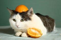 Γάτα στο αστείο πορτοκαλί καπέλο στο επικεφαλής στενό επάνω πορτρέτο Στοκ εικόνες με δικαίωμα ελεύθερης χρήσης